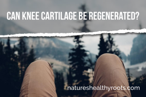 Can knee cartilage be regenerated