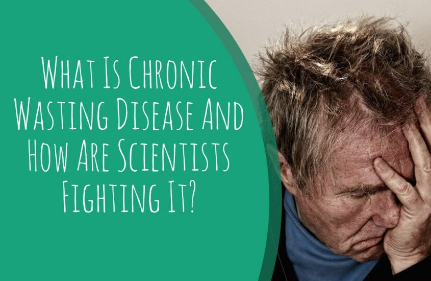 What Is Chronic Wasting Disease And How Are Scientists Fighting It?